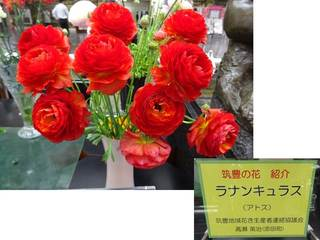 3県庁の花.jpg