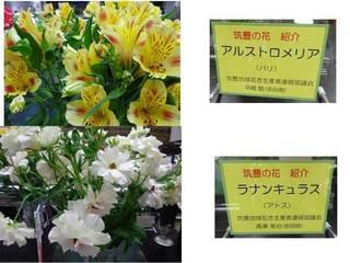 4県庁の花.jpg