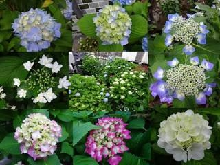6月4日の庭.jpg