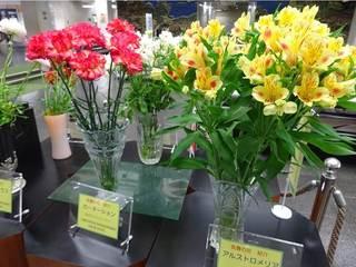 県庁の花.jpg