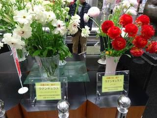 県庁の花2.jpg